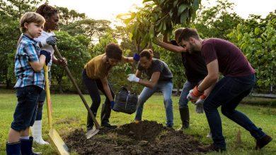 Photo of ARROYITO: DESCUENTAN 5% EN TASA A LA PROPIEDAD A VECINOS QUE PLANTEN ÁRBOLES